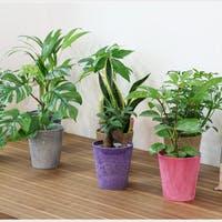 業務効率を上げるデスク向け観葉植物30選