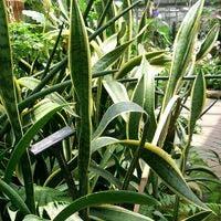 観葉植物のサンセべリアを育てましょう