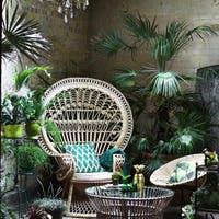 おしゃれでインテリア性の高い観葉植物と飾り方