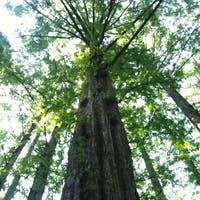 木の種類を知って観葉植物をもっと好きになろう