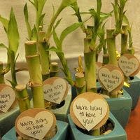 ギフトにするならドラセナ・ミリオンバンブー(幸運の竹)を通販で!おすすめ6選のご紹介