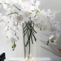 胡蝶蘭を剪定してお花を2倍楽しみましょう