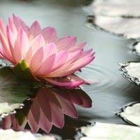 【徹底解説】お供えに胡蝶蘭を贈る際のマナーを知ろう!