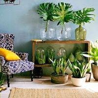 簡単に育てられるおしゃれな観葉植物10選のご紹介!