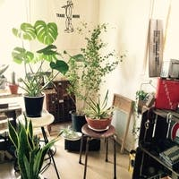 圧倒的に育てやすい観葉植物厳選7選