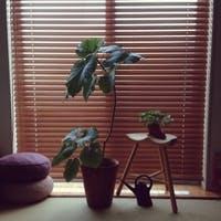 日陰/半日陰に強い耐陰性の観葉植物を徹底紹介