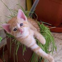 猫と観葉植物が安心して生活するためには?