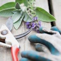 観葉植物の正しい剪定方法をマスターしよう!