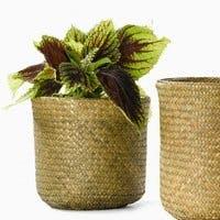 最新情報!観葉植物を入れるバスケット鉢カバーの魅力