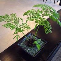 注目のシダ植物リュウビンタイを徹底解説!ギフトにおすすめ3選もご紹介