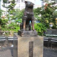 【渋谷駅周辺】おしゃれな観葉植物の人気トレンド店5選