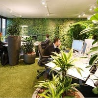 オフィスに観葉植物で業務効率アップ!