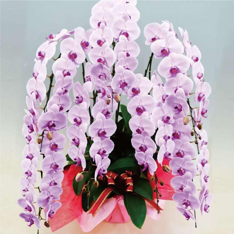 蘭 が しおれ たら 胡蝶 花