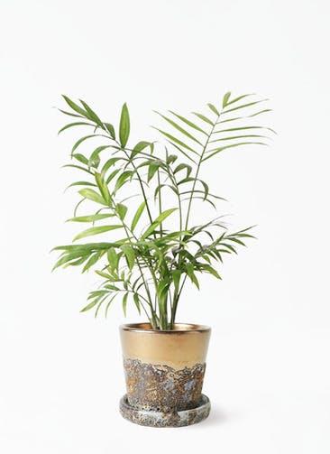 観葉植物 テーブルヤシ 4号 ハレー ブロンズ 付き