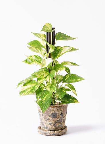 観葉植物 ポトス 4号 ハレー カーキー 付き