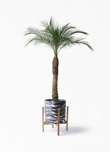 観葉植物 フェニックスロベレニー 8号 ホルスト シリンダー マーブル ウッドポットスタンド付き