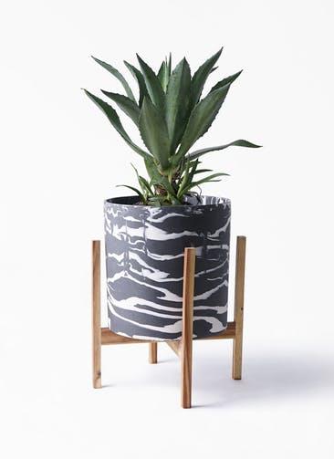 観葉植物 アガベ 8号 アメリカーナ ホルスト シリンダー マーブル ウッドポットスタンド付き