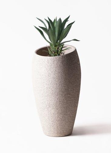 観葉植物 アガベ 8号 アメリカーナ エコストーントールタイプ Light Gray 付き