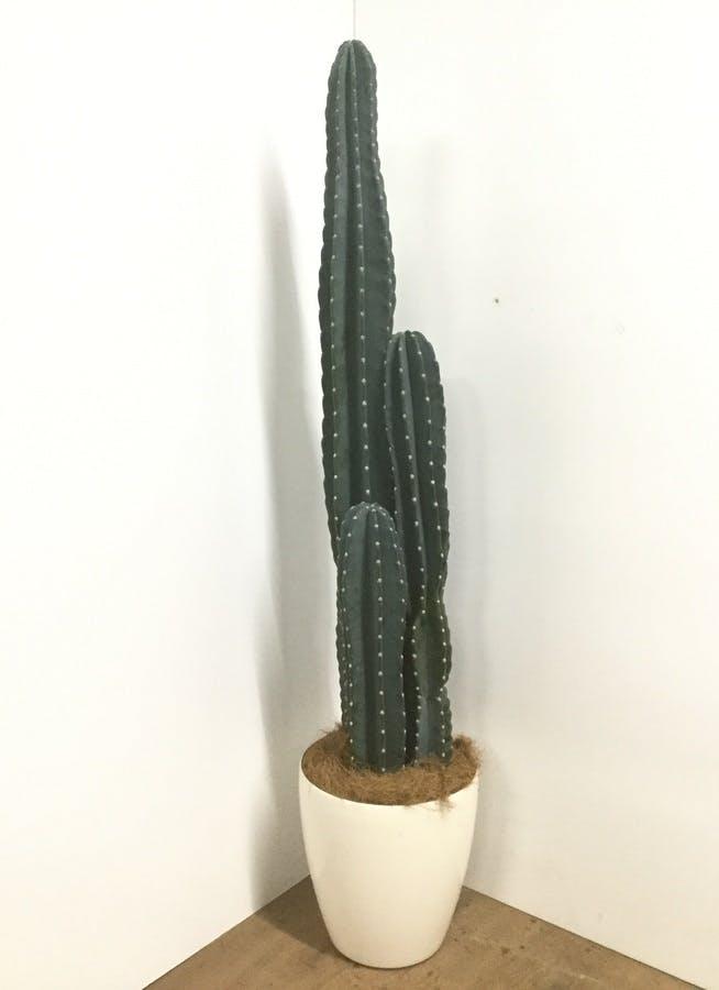 観葉植物 【170cm】【鉢カバー付】柱サボテン 10号 #22029
