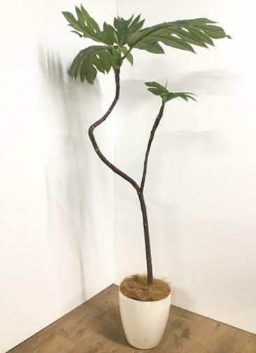 観葉植物 【170cm】【鉢カバー付】パンの木 8号 曲り #22103