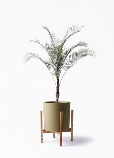 観葉植物 ヒメココス 8号 ホルスト シリンダー オリーブ ウッドポットスタンド付き