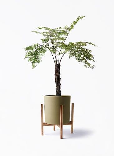 観葉植物 ヘゴ 8号 ホルスト シリンダー オリーブ ウッドポットスタンド付き