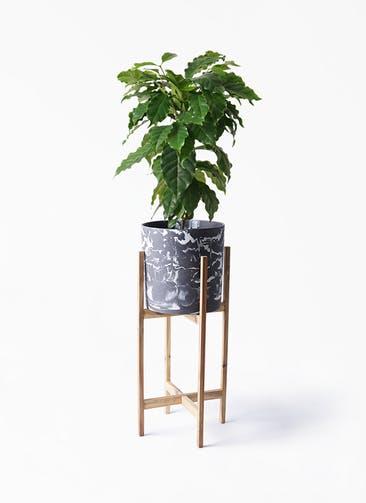 観葉植物 コーヒーの木 6号 ホルスト シリンダー マーブル ウッドポットスタンド付き