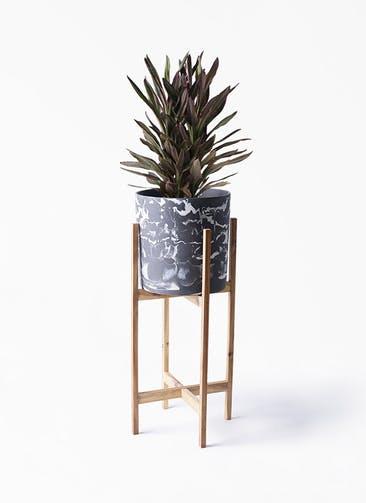 観葉植物 コルディリネ (コルジリネ) サンゴ 6号 ホルスト シリンダー マーブル ウッドポットスタンド付き