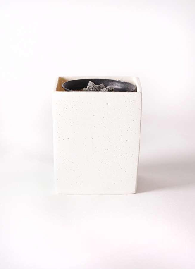 ハオルチア 軟葉系 灰 実生選抜 3号 ポリストーンキューブSホワイト 付き