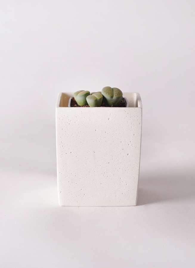 リトープス 緑 3号 ポリストーンキューブSホワイト 付き