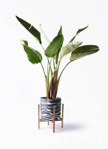 観葉植物 オーガスタ 8号 ホルスト シリンダー マーブル ウッドポットスタンド付き