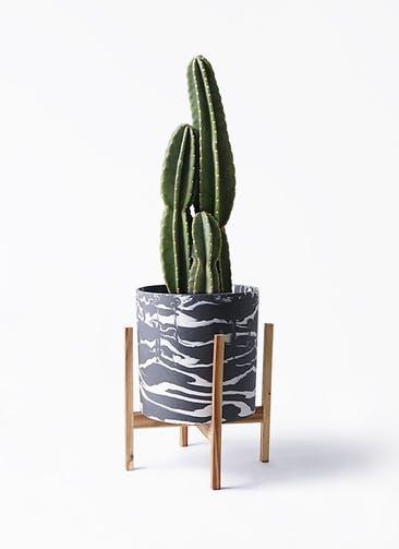 観葉植物 柱サボテン 8号 ホルスト シリンダー マーブル ウッドポットスタンド付き