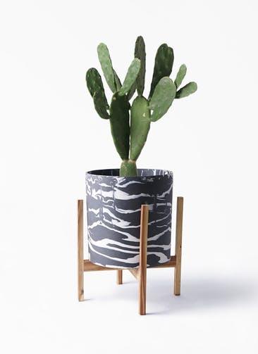 観葉植物 ウチワサボテン 8号 ホルスト シリンダー マーブル ウッドポットスタンド付き