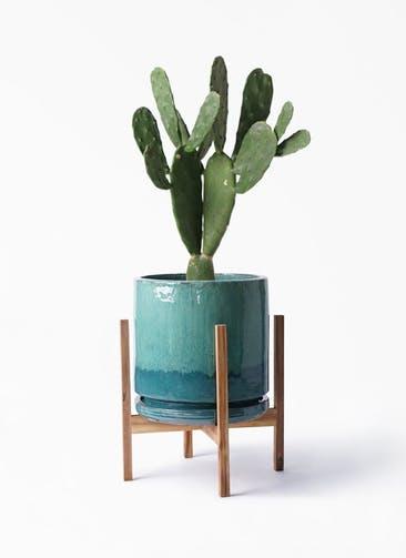 観葉植物 ウチワサボテン 8号 ビトロ エンデガ ターコイズ ウッドポットスタンド付き