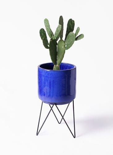 観葉植物 ウチワサボテン 8号 ビトロ エンデカ ブルー アイアンポットスタンド ブラック 付き