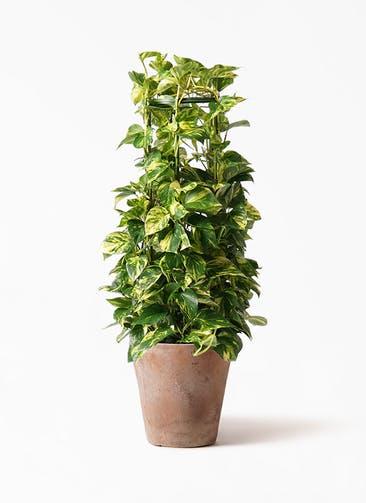 観葉植物 ポトス 8号 ルーガ アンティコ ソリッド 付き
