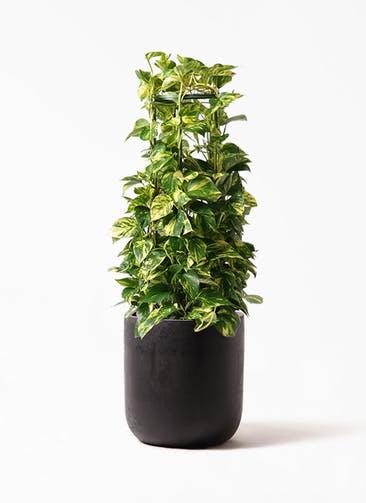 観葉植物 ポトス 8号 エルバ 黒 付き