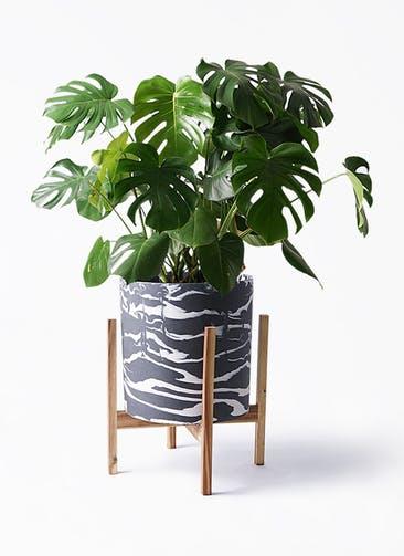 観葉植物 モンステラ 8号 ボサ造り ホルスト シリンダー マーブル ウッドポットスタンド付き