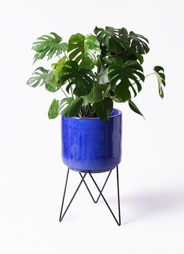 観葉植物 モンステラ 8号 ボサ造り ビトロ エンデカ ブルー アイアンポットスタンド ブラック 付き