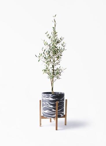観葉植物 オリーブの木 8号 コロネイキ ホルスト シリンダー マーブル ウッドポットスタンド付き