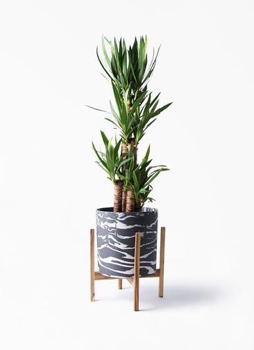 観葉植物 ユッカ 8号 ノーマル ホルスト シリンダー マーブル ウッドポットスタンド付き