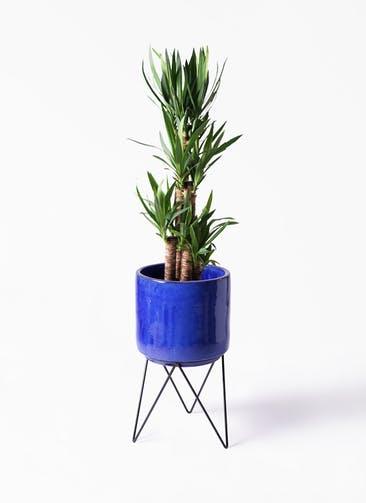 観葉植物 ユッカ 8号 ノーマル ビトロ エンデカ ブルー アイアンポットスタンド ブラック 付き