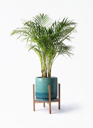 観葉植物 アレカヤシ 8号 ビトロ エンデガ ターコイズ ウッドポットスタンド付き