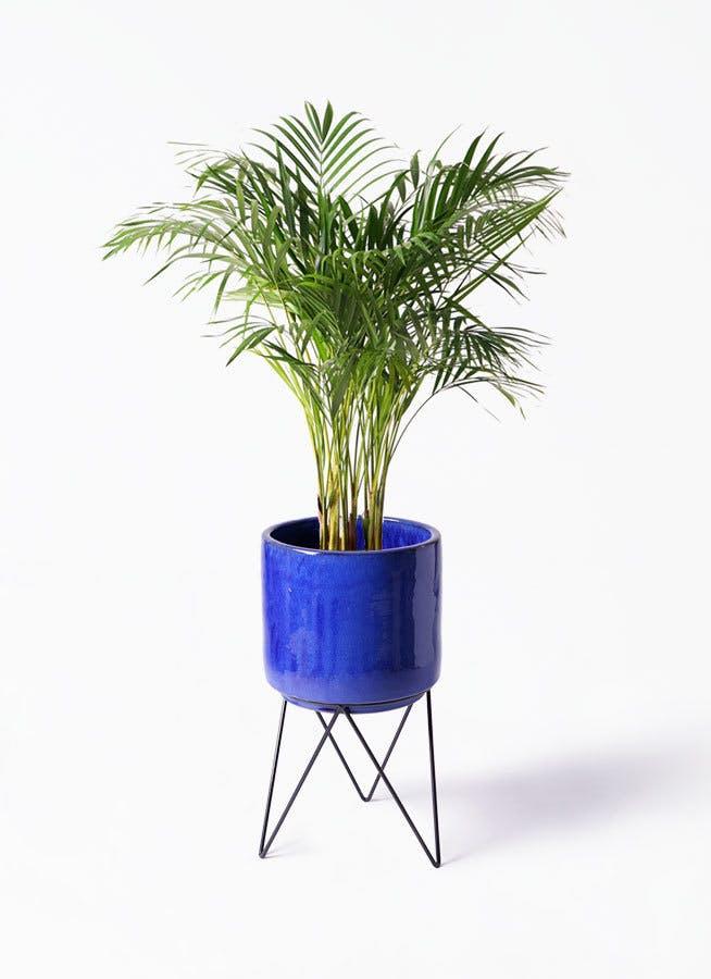 観葉植物 アレカヤシ 8号 ビトロ エンデカ ブルー アイアンポットスタンド ブラック 付き