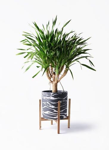 観葉植物 ドラセナ パラオ 8号 ホルスト シリンダー マーブル ウッドポットスタンド付き