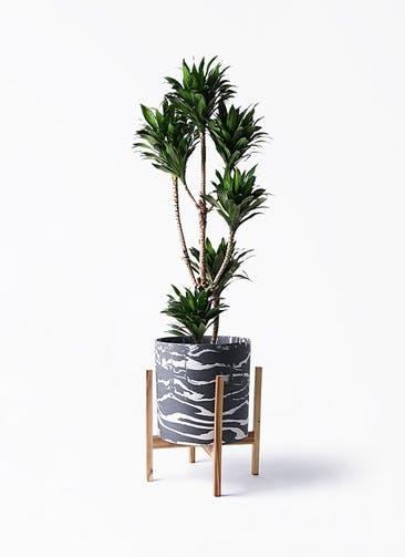 観葉植物 ドラセナ コンパクター 8号 ホルスト シリンダー マーブル ウッドポットスタンド付き