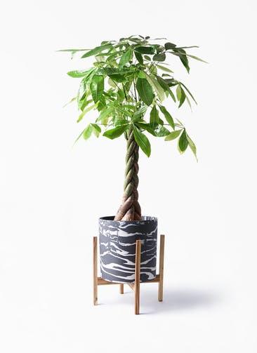 観葉植物 パキラ 8号 ねじり ホルスト シリンダー マーブル ウッドポットスタンド付き