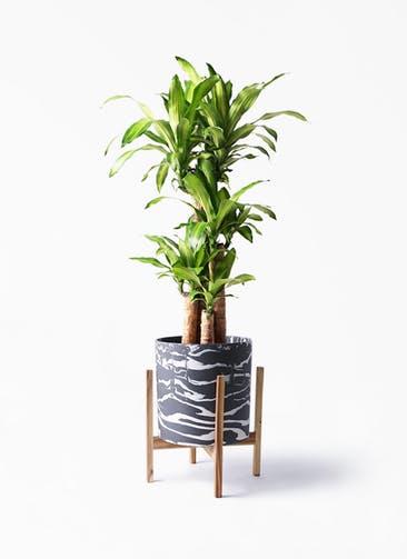 観葉植物 ドラセナ 幸福の木 8号 ノーマル ホルスト シリンダー マーブル ウッドポットスタンド付き