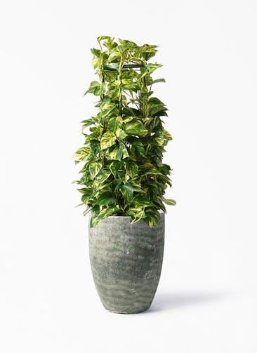 観葉植物 ポトス 8号 プラスチック アビスソニア トール 緑 付き