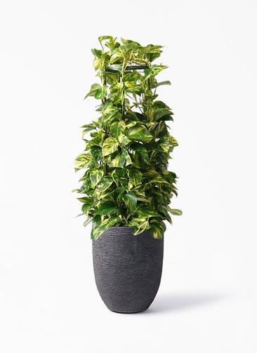 観葉植物 ポトス 8号 プラスチック ビアスアルトエッグ ブラック 付き